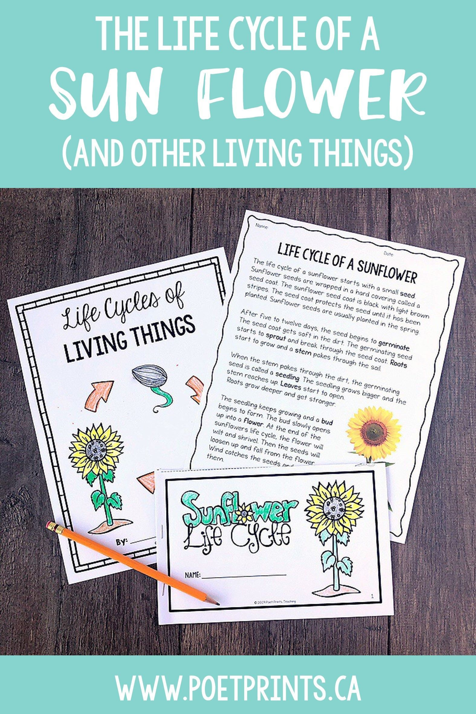 Life Cycles Of Living Things Project Based Learning