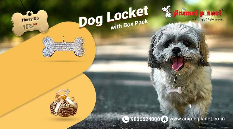 Buy The Best Online Pets Products In Haldia From Animel Planet But Pet Products From The Best Pet Shop In Haldia Now At Dog Accessories Dogs Pet Food Store