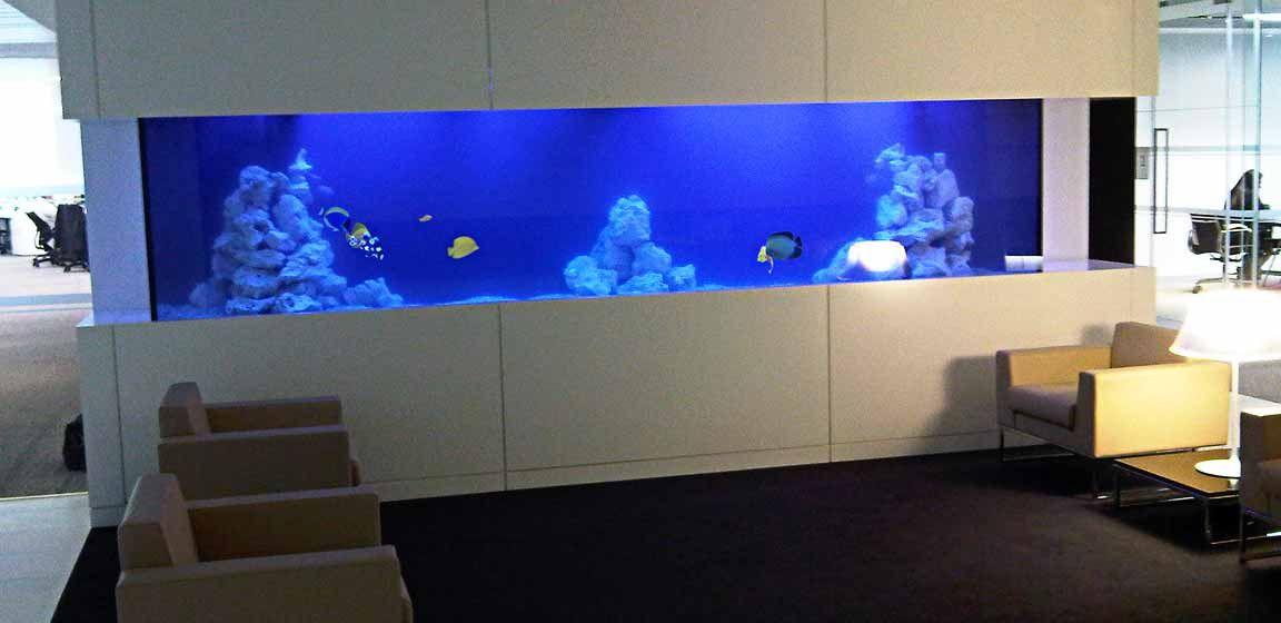 Large Bespoke Marine Office Aquarium Bespoke Fish Tank Custom Fish Tanks Aquarium