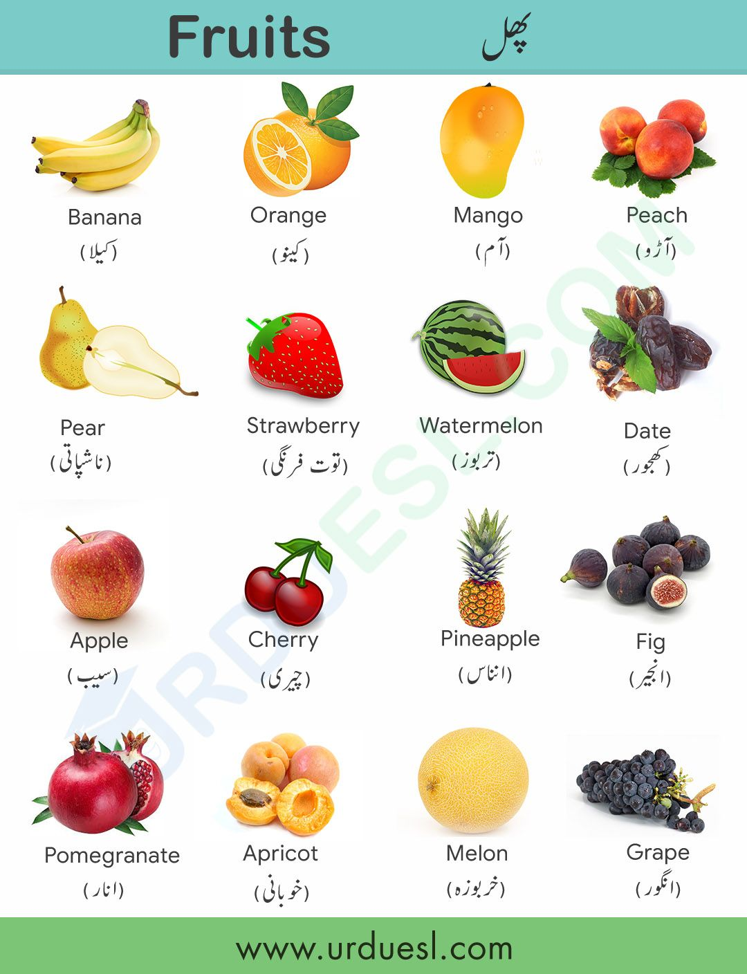 All Fruit Names In English And Urdu With Pictures