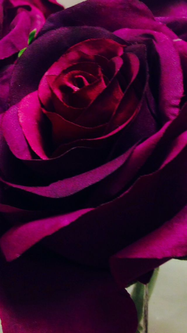 Beautiful IPhone Wallpaper Roses