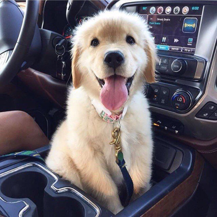 Yup Every Car Should Come With A Pup Holder Puppies