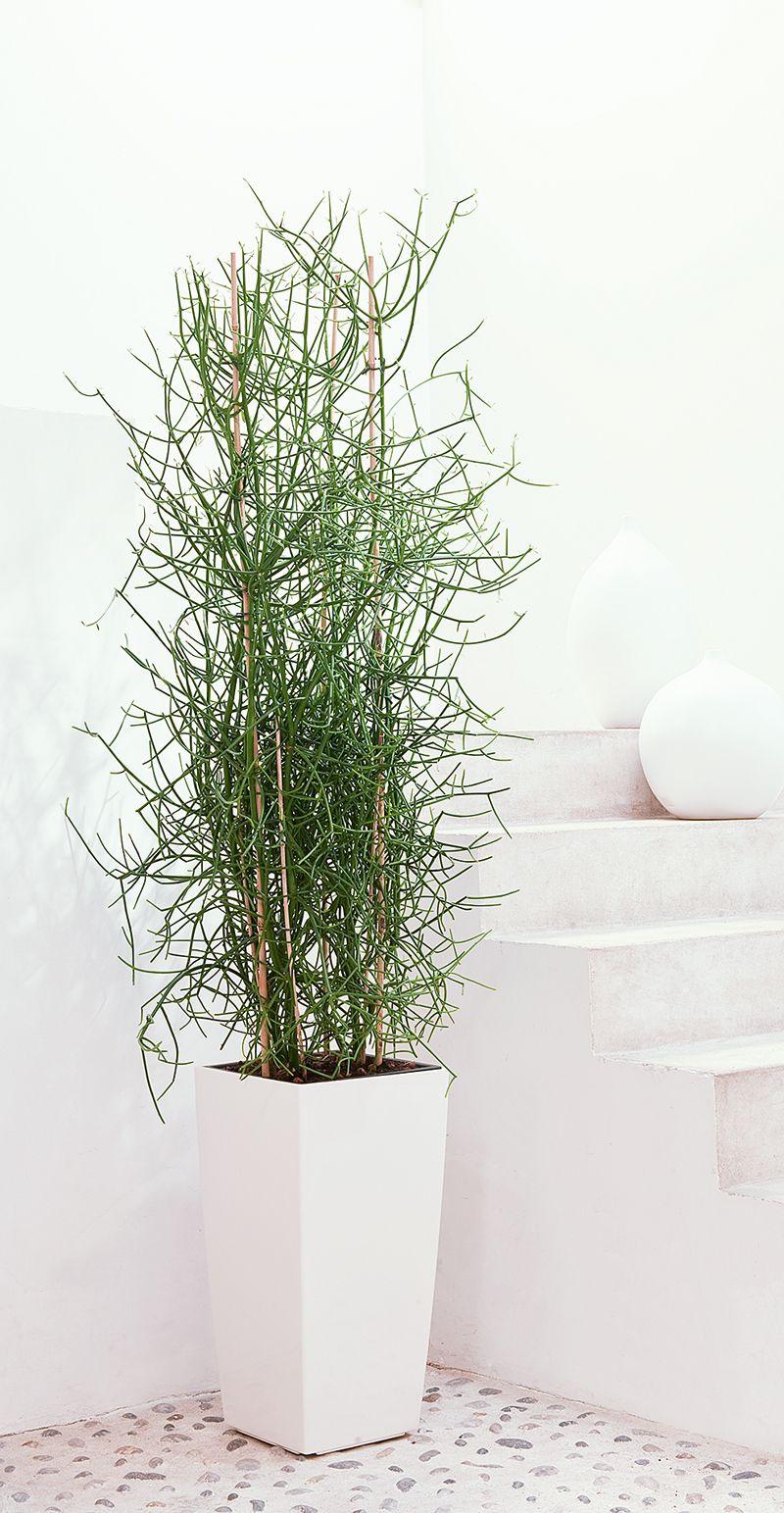 plante verte oxygene