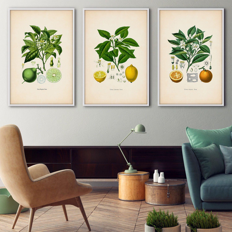 Framed botanical print set, Citrus framed art, Botanical prints ...