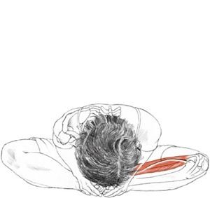 baddha konasana  yoga anatomy abstract artwork love my body