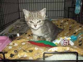Blind Cat Rescue Sanctuary Inc Sweet Pea Cat Rescue Cats