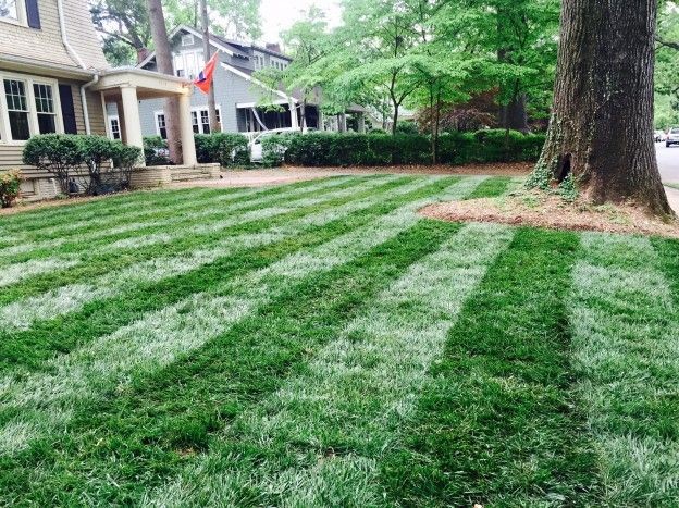 Super-Sod's New Blog Post: Apply Lawn Fungicide to Tall