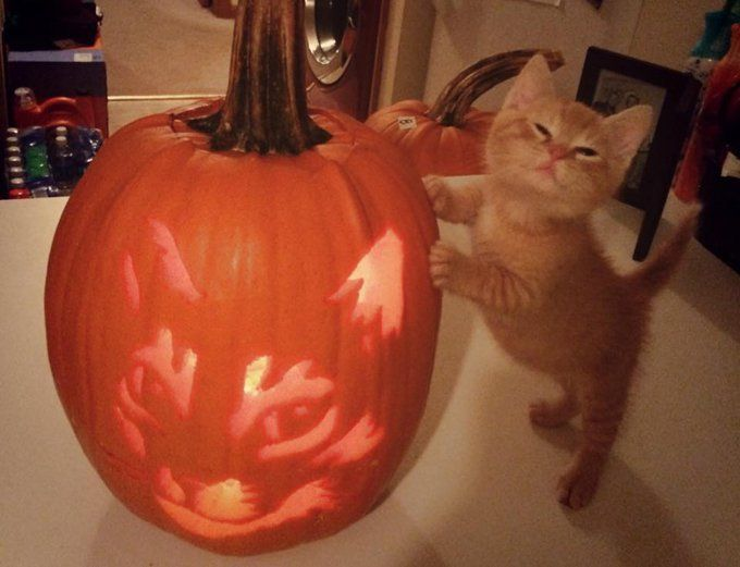Cat-O-Lanterns: 30 Of The Greatest Halloween Cat Pumpkin Designs [PICTURES] - CatTime