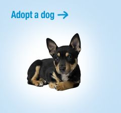 Rspca Australia Adopt A Pet Please Take A Look Dog Adoption Pets Pet Adoption