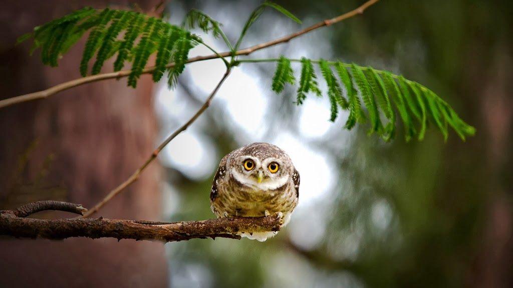 Búho en el Bosque fondos de aves
