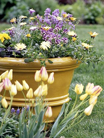 Cool Season Containers To Get An Early Start On Spring Container Flowers Flower Pots Garden Containers