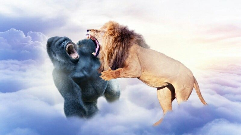 Disaster: Harambe The Gorilla Mauled By Cecil The Lion In Animal Heaven
