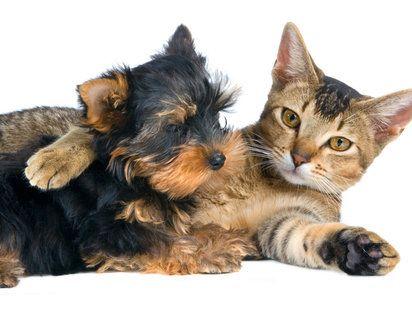 Perros Y Gatos Conviviendo Es Posible Dog Cat And Kitten