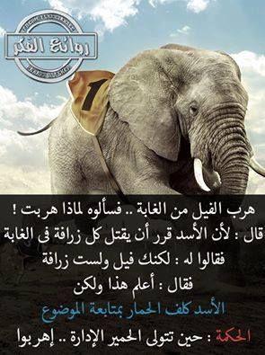 أنا فى اﻻذية مؤذية Bentbalad128 Work Jokes Funny Arabic Quotes Arabic Quotes