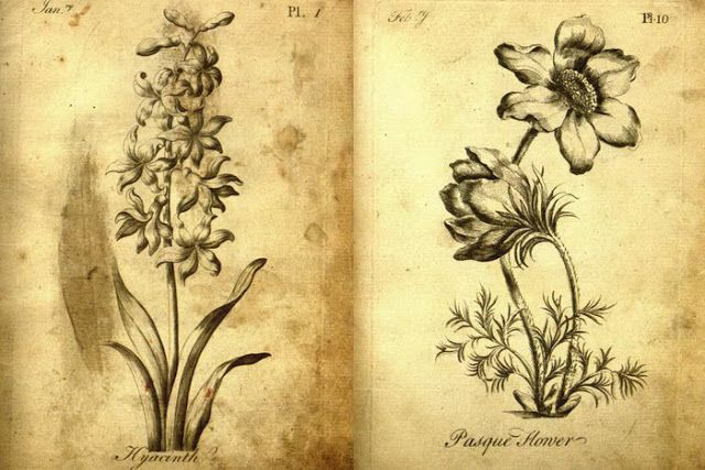 Как выглядит первая раскраска для взрослых 1760 года ...
