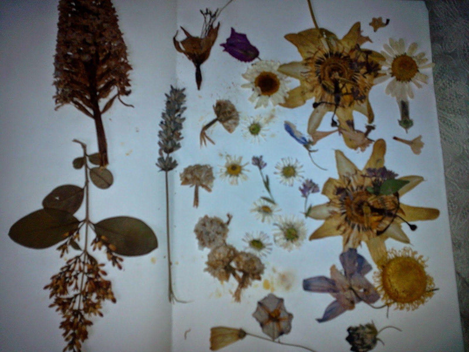 pequeños trucos para sobrevivir a la crisis: Mis manualidades con flores prensadas.