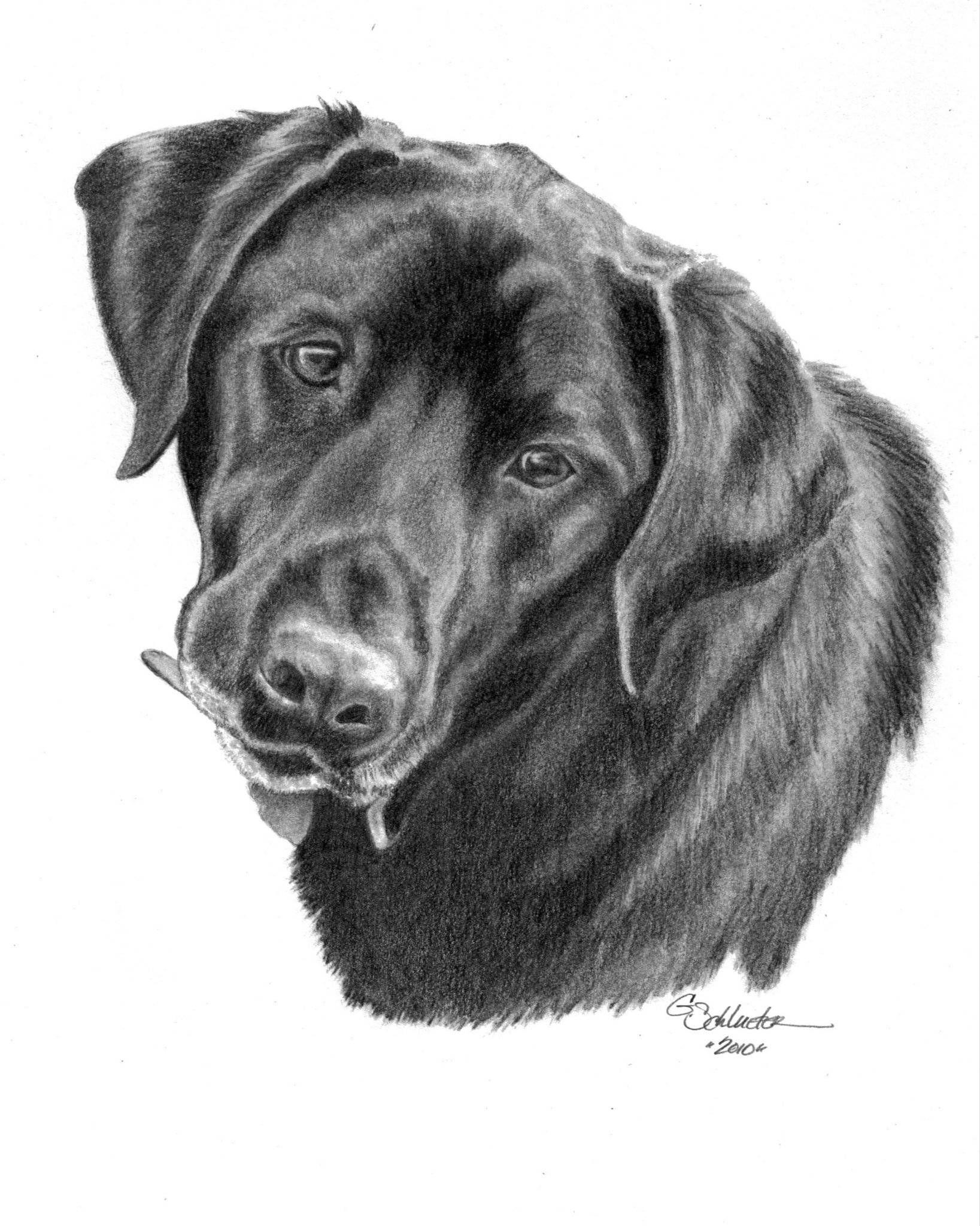 Drawing 5 x 7 Custom Pet Portrait
