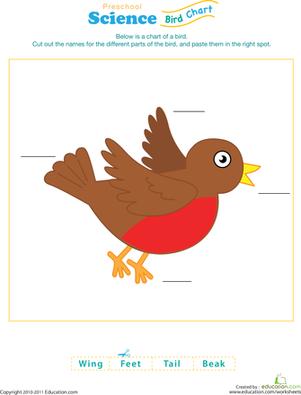 preschool bird math worksheets | Download free printable birds dot ...