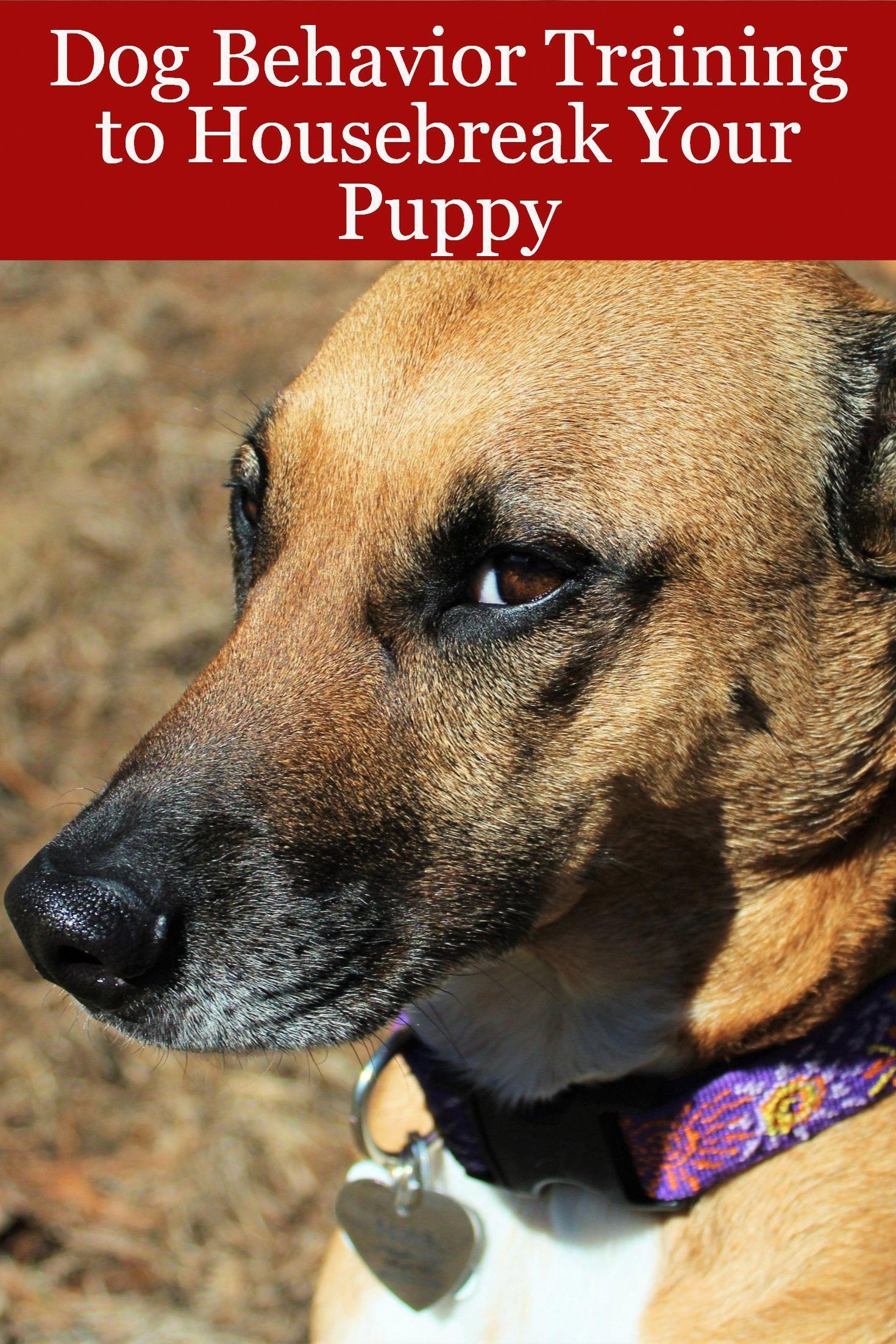 Weeklyfluff Dogsofinstaworld Dogsofig Dog Features Dog Behavior