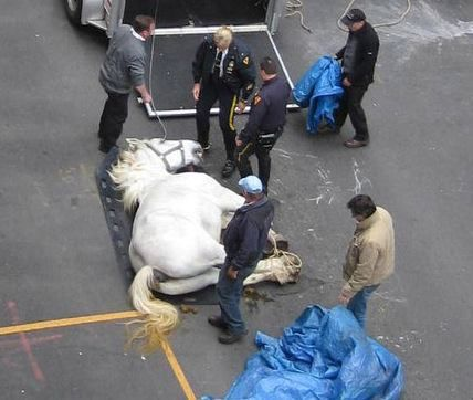Vigil & Protest for Charlie the Carriage Horse