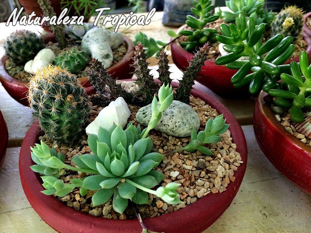 Arreglo con suculentas en maceta de barro cactus y mas for Cactus cuidados interior