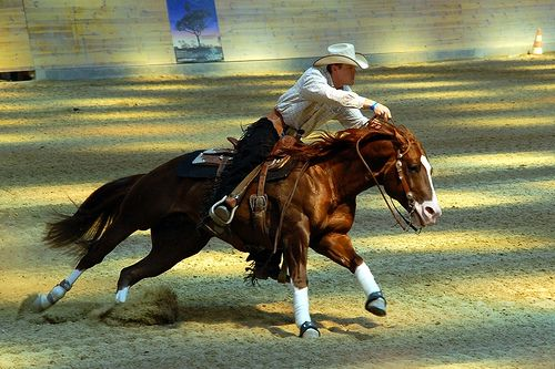 Cutting western quarter paint horse appaloosa equine tack cowboy