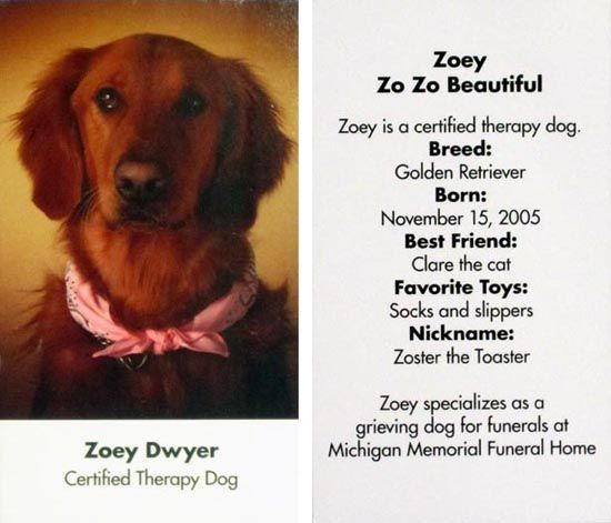 Therapy Dog Business Cards Google Search Therapy Dogs Dog Business Google Business Card