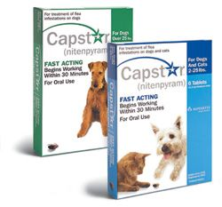 Eliminating Fleas On Your Pet Is Easy With Capstar Nitenpyram Because Capstar Provides Fast Flea Relief For Y Fleas Flea Prevention For Cats Pet Clinic