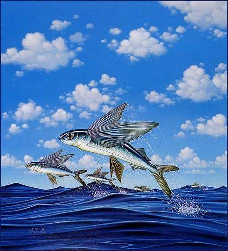 Braldt Bralds Flying Fish Delta Airlines Underwater Painting Fish Painting Fish Art