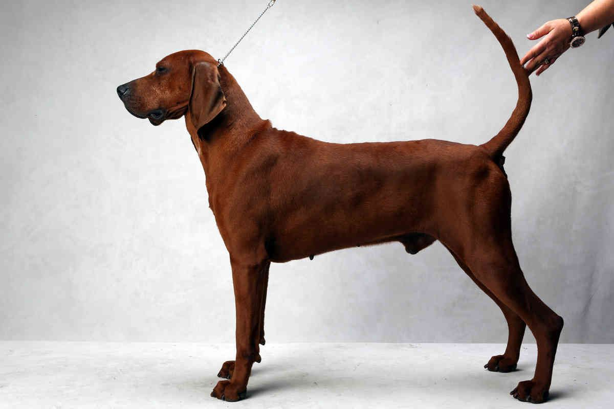 Westminster S Best Of Breed Photographs Nytimes Com