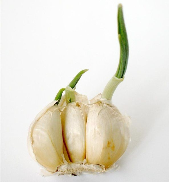 #1. Garlic