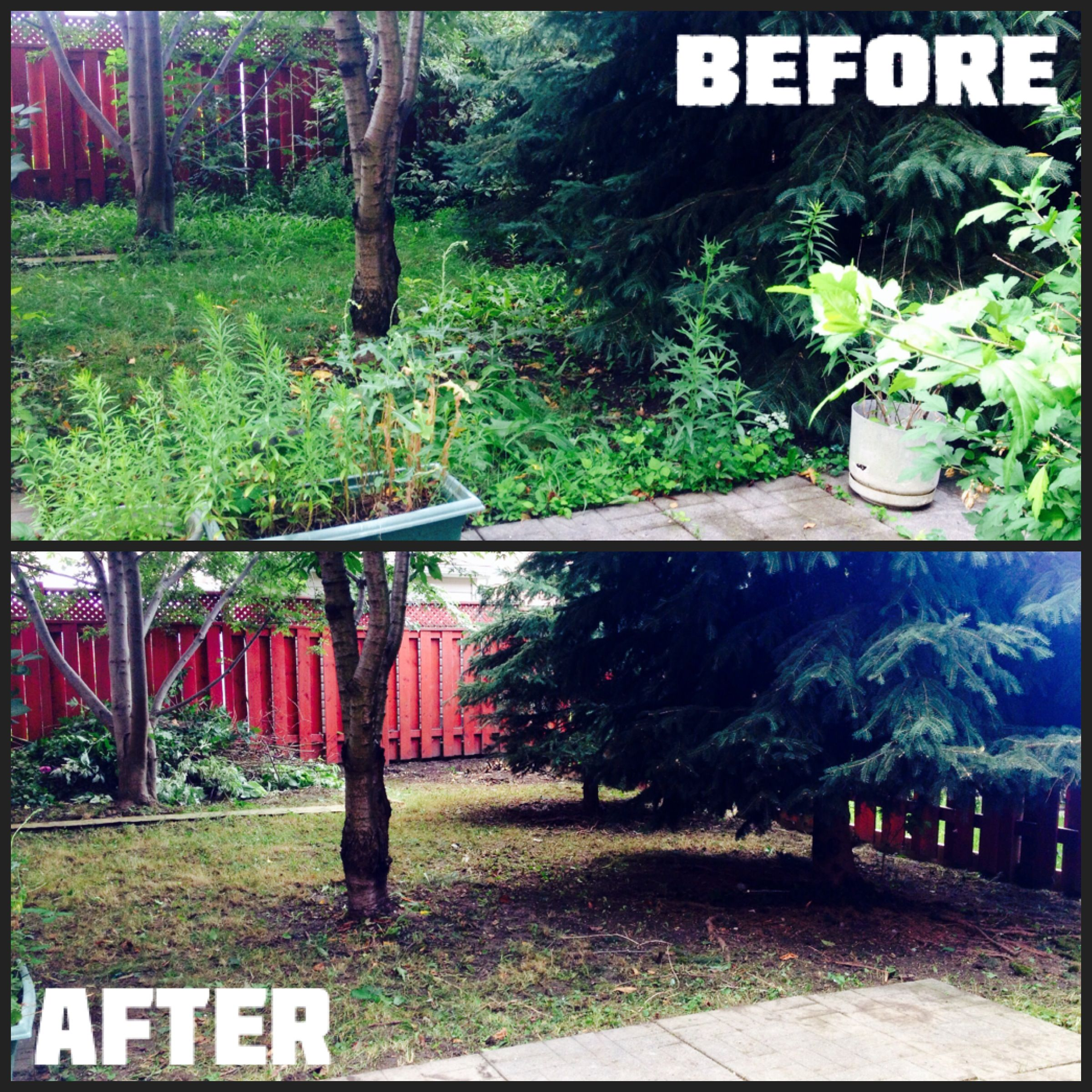 Now Our Client Can Enjoy Their Yard! Before And After