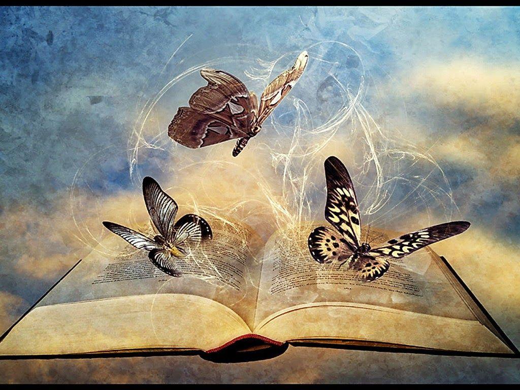 مجموعة من خلفيات الفراشات الرائعة لجهاز الكمبيوتر Butterfly Photos Butterfly Insects
