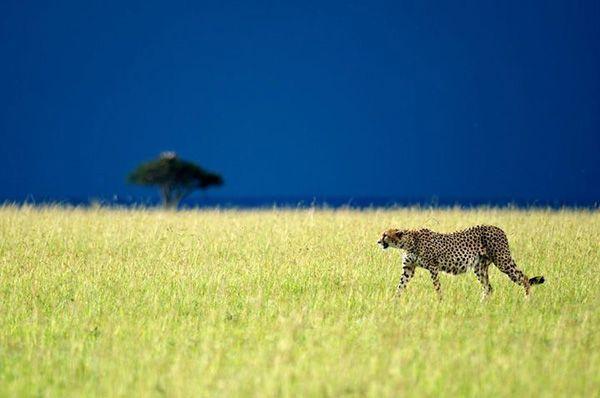 Christian Baillet vous emmène découvrir l'Afrique...  http://voyage-photographique.com/christian-baillet/