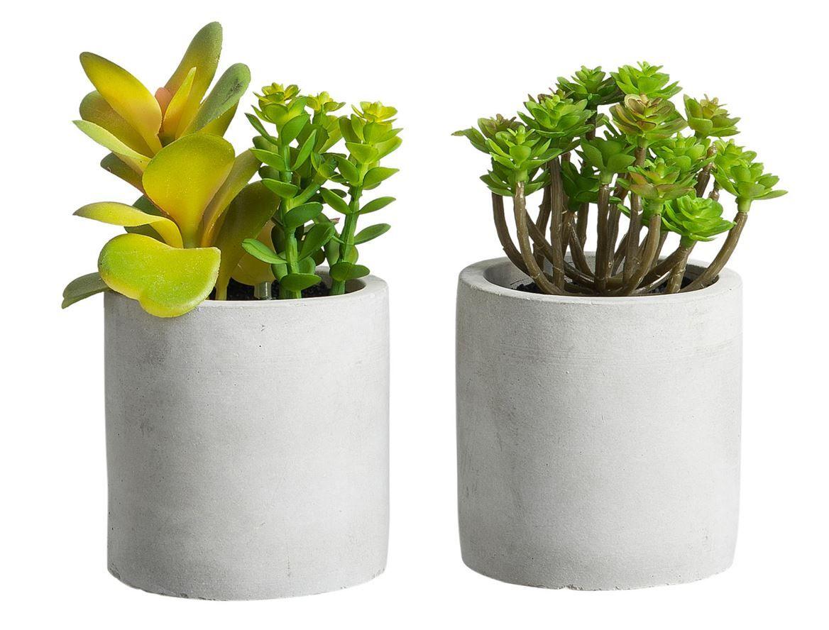 CEMENTINO Pot avec plante vert H 14 cm; Ø 7,5 cm en 2020