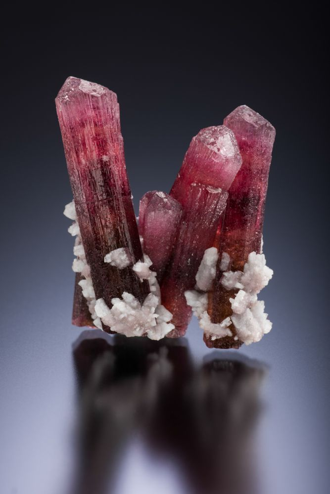 Elbaite tourmaline with albite, Ouarzazate, Morocco – 3.3 cm Spirifer specimen, J. Scovil photo.
