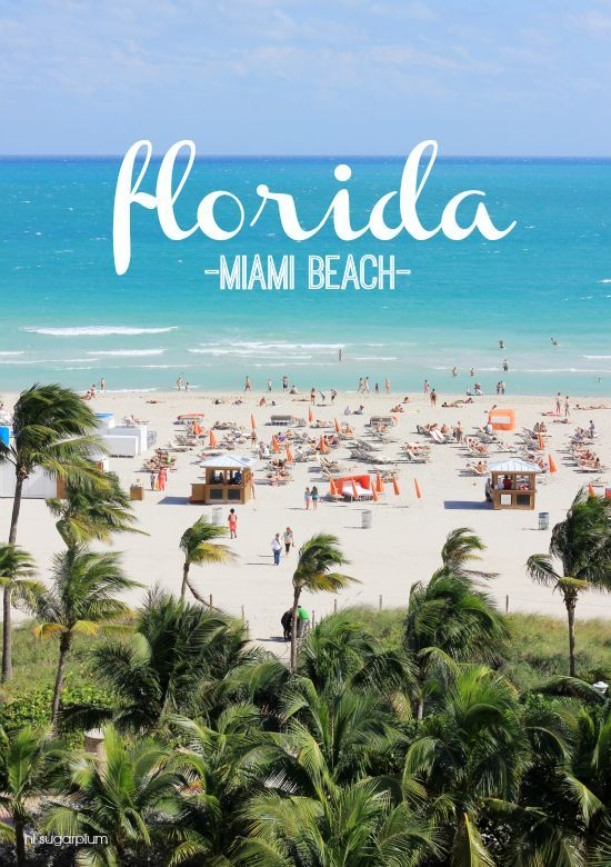 Trip Report Miami Beach Hi Sugarplum Bloglovin
