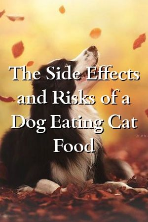 Rachel Paige Tells About The Side Effects and Risks of a Dog Eating Cat Food #dogsideas#dogcat#cutedogs#mydog#dogquotes#catdog#puppyideas#doglife
