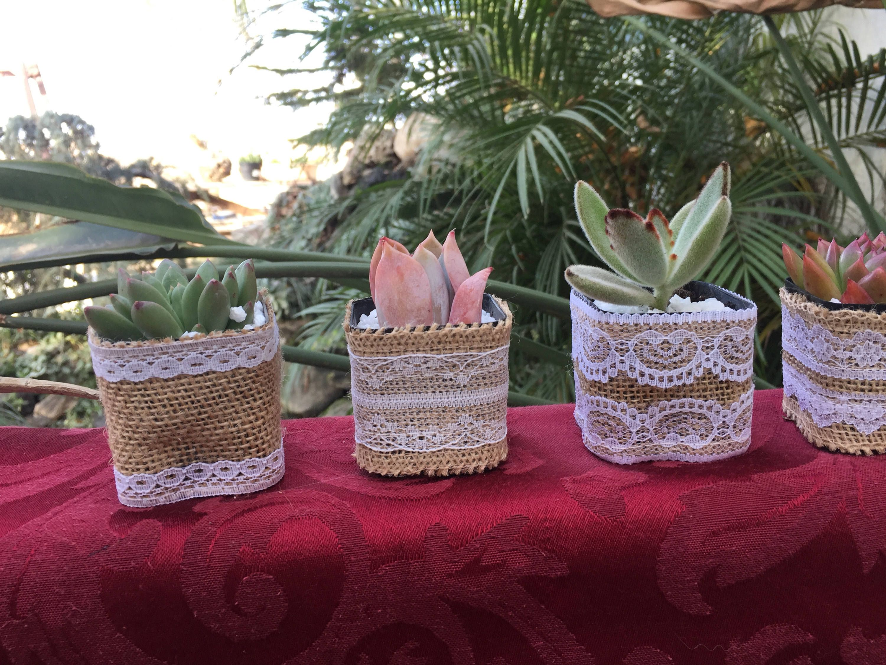 40 Succulent wedding favors wrapped in burlap and lace