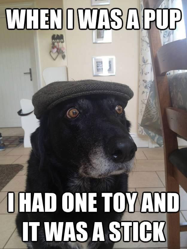 Too Funny Haha Back In My Day Funny Dog Memes Funny Dogs Funny Animal Pictures