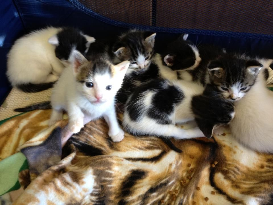 Was Gonna Pull From The Shelter Then 7 Baby Kittens Were Brought