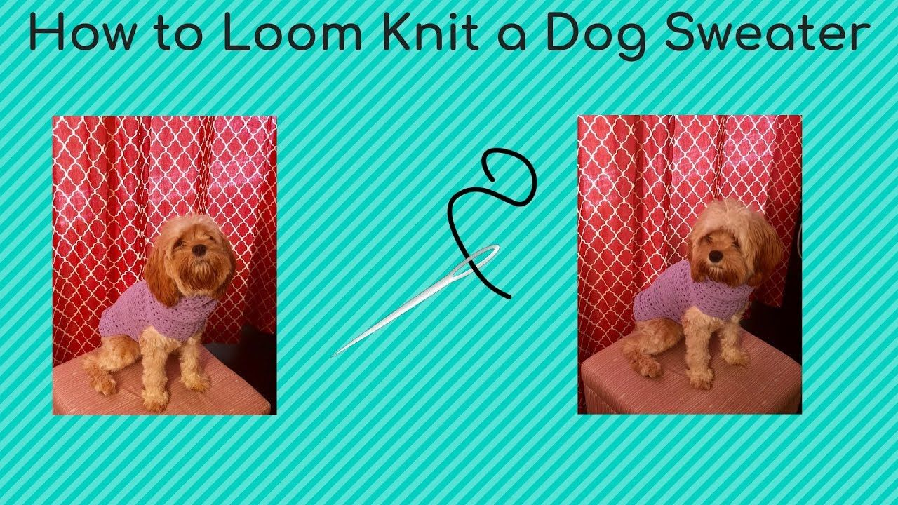 How to Loom Knit A Dog Sweater YouTube | Loom knitting