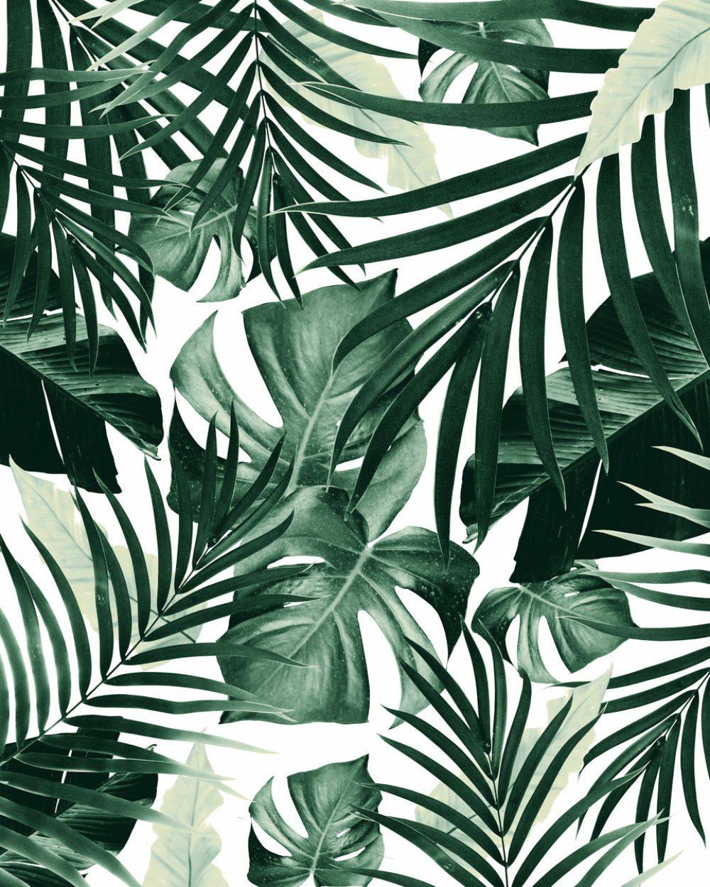 Tropical Jungle Leaves Pattern 4 Tropical Decor Art Phone Case By Anita S Bella S Art Anitabellaart From 17 00 Mipic Leaves Wallpaper Iphone Leaf Wallpaper Plant Wallpaper Get 15% off all subscriptions and credits with coupon code picjumbo15. pinterest