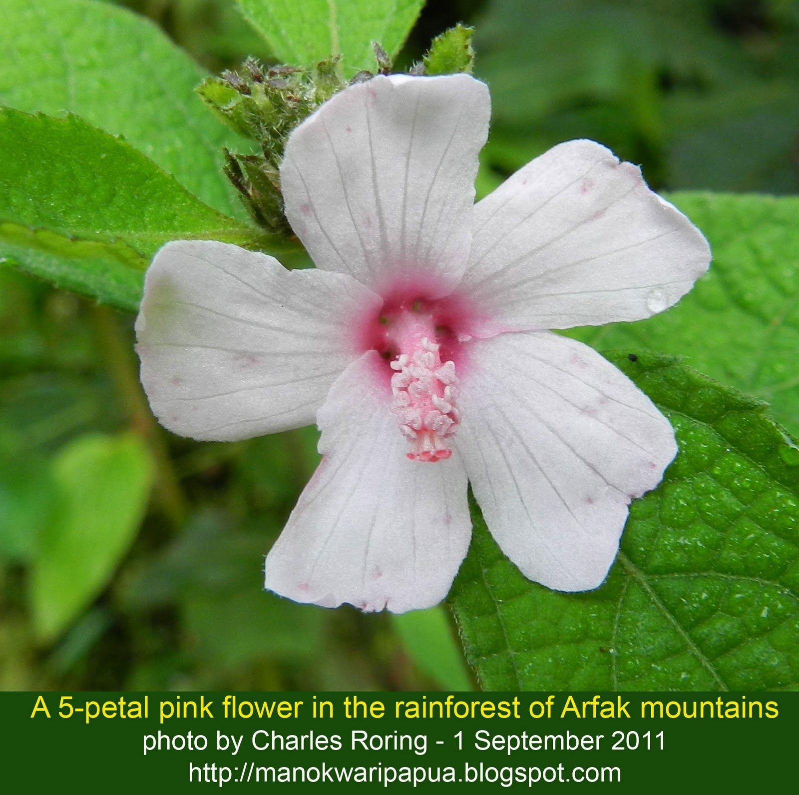 Pretty Rainforest Flowers