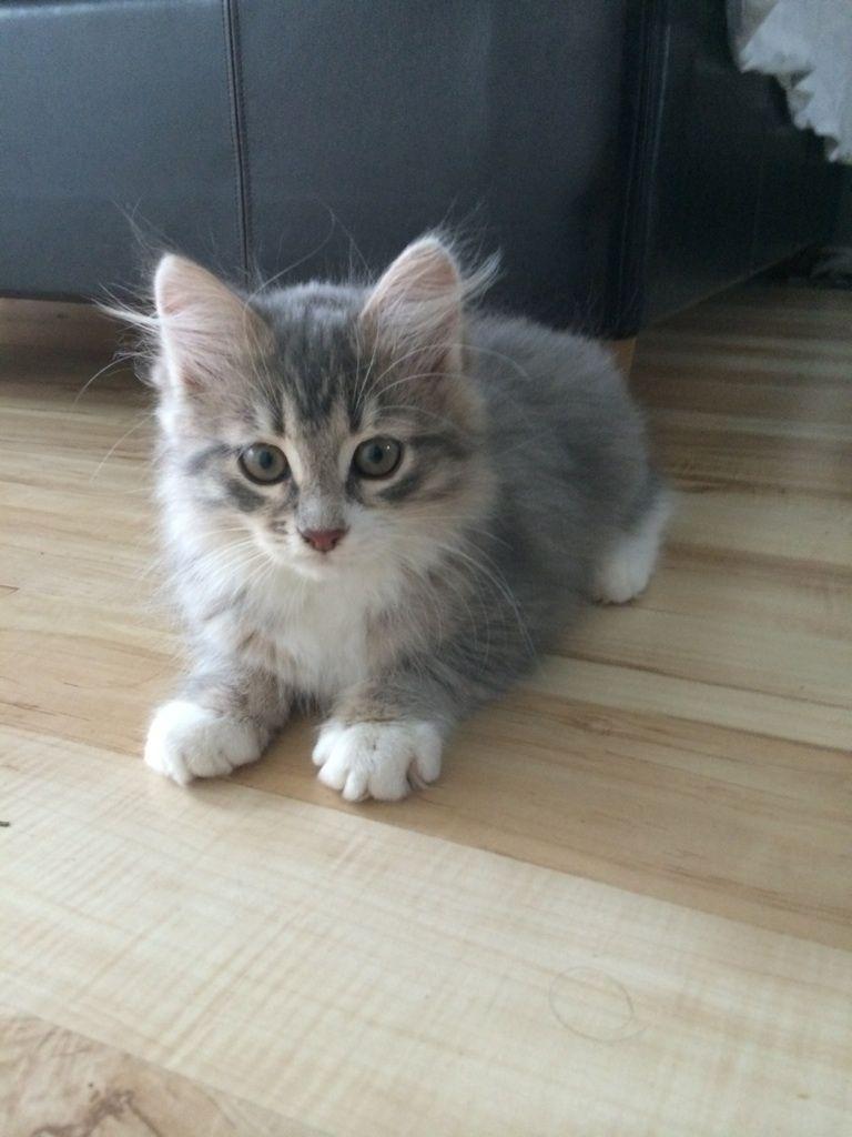 Pin De Yolanda En Gatitos Gatos Animales Bebe