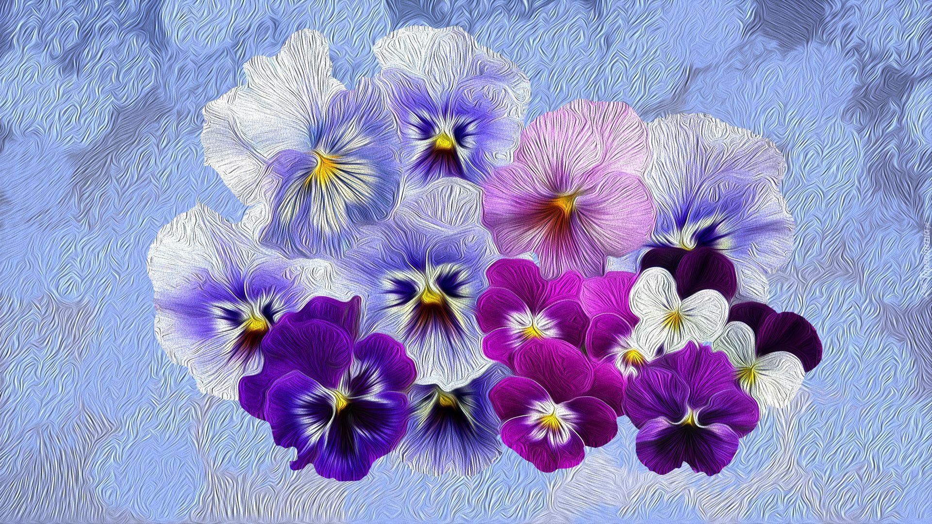 Kwiaty Kolorowe Bratki Cute Wallpapers Wallpaper Plants