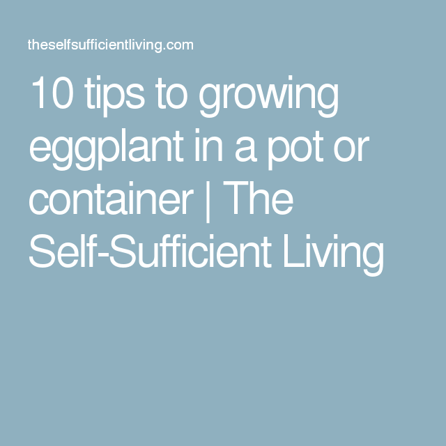 10 Tips For Growing Eggplants In A Pot Or Container