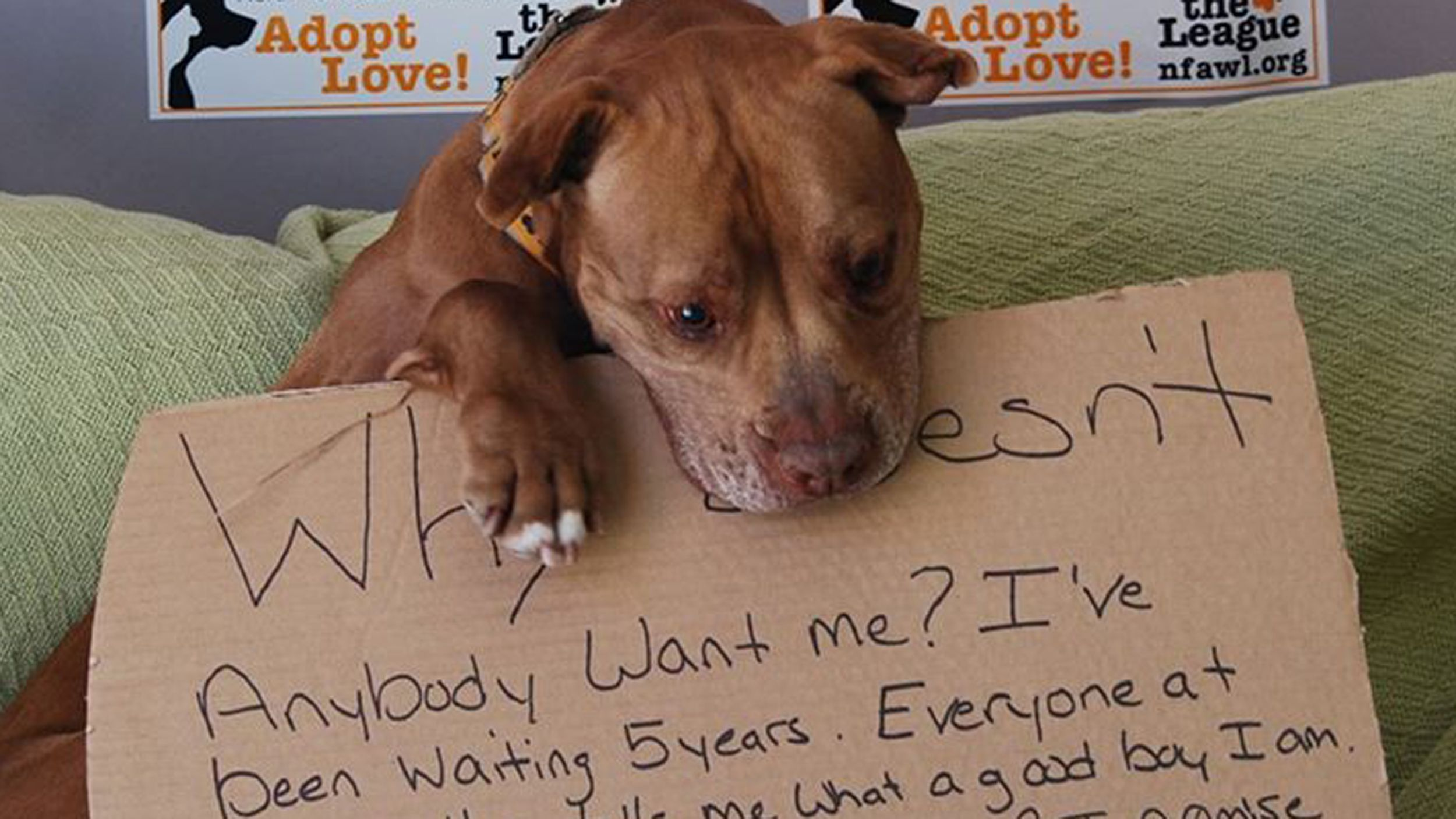 Why Doesn T Anybody Want Me Heart Melting Photo Helps Dog Find Home Pitbulls Dog Waiting Animal Welfare League