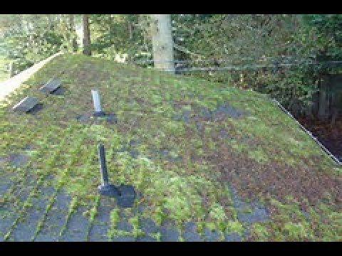 Best Way To Get Moss Off Your Roof In 2019 Asphalt Roof