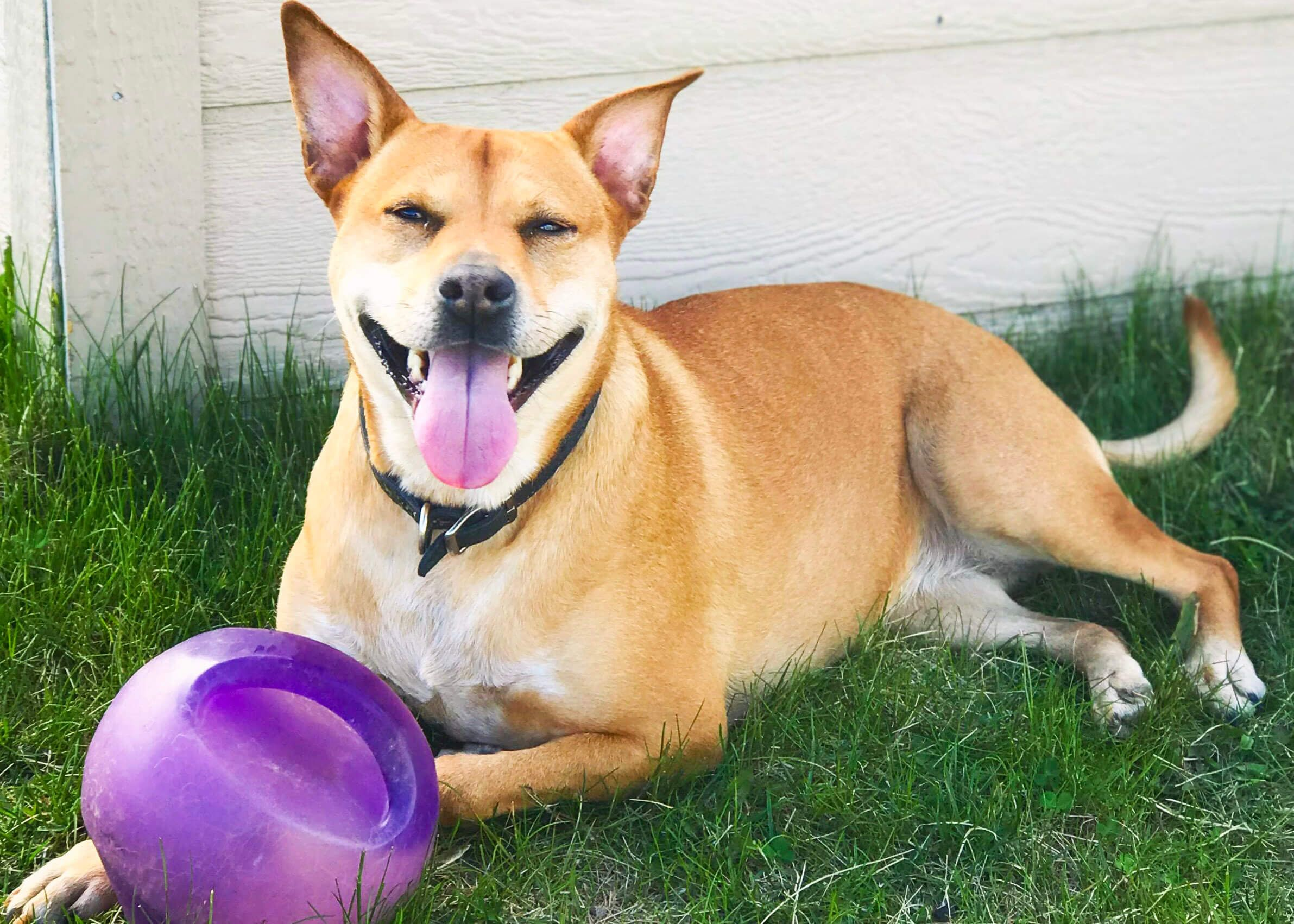 Tough Dog Toys Even Heavy Chewers Will Love Tough Dog Toys